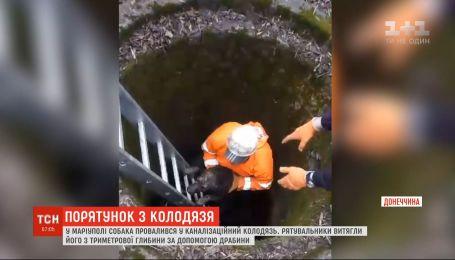 В Мариуполе чрезвычайники спасли собаку, которая провалилась в канализационный колодец