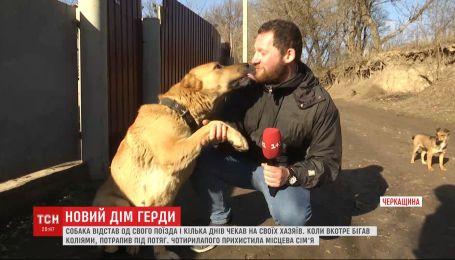 Український Хатіко: як пес відстав від господарів і вірно чекав на них