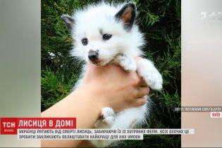 Небайдужі рятують лисиць із хутряних ферм: як доглядати за незвичним хатнім улюбленцем