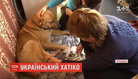 В Черкасской области семья приютила собаку, котрая отстала от своего поезда