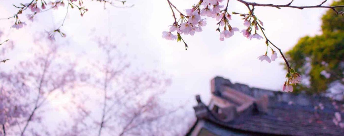 """В украинском переводе выйдет книга о поиске красоты в несовершенстве - """"Ваби-саби"""" Оливера Люка Делори"""