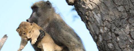 """Настоящий """"Король лев"""". В ЮАР павиан из сафари-парка воссоздал культовую сцену из мультика"""