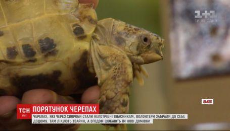 У Львові двоє друзів доглядають за черепахами, від яких відмовилися власники