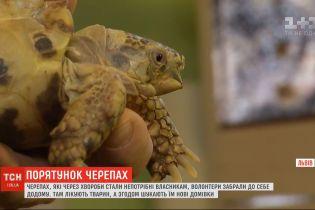 Волонтери у Львові виходжують черепах, яких колишні власники позбулись через хвороби