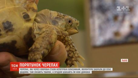Волонтеры во Львове выхаживают черепах, от которых прежние владельцы избавились из-за болезни