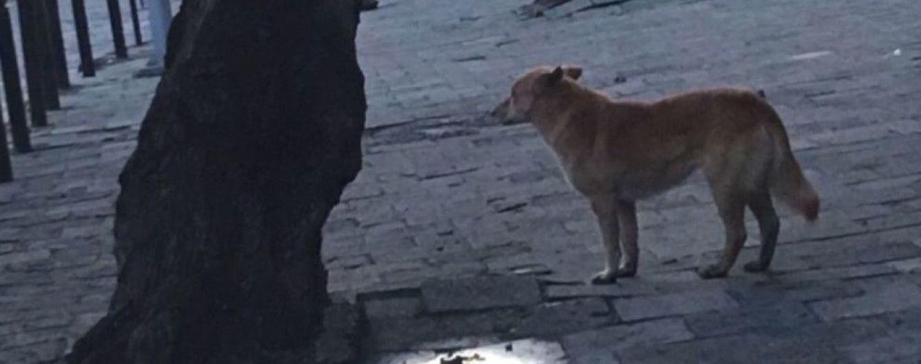 У Львові рудий пес тероризує район: за два тижні майже 20 покусаних
