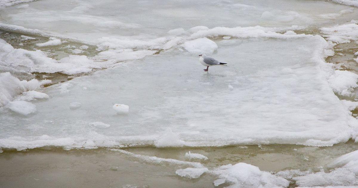 Иностранцы убегали от украинских копов ледяным Днепром: подробности спецоперации