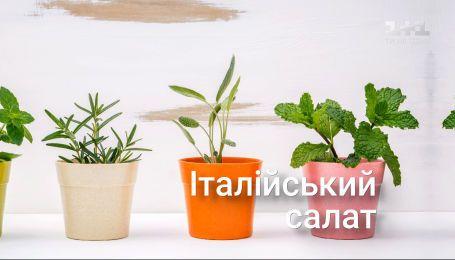 """Саджаємо та вирощуємо у домашніх умовах набір рослин """"Італійський салат"""" — Сад на підвіконні"""