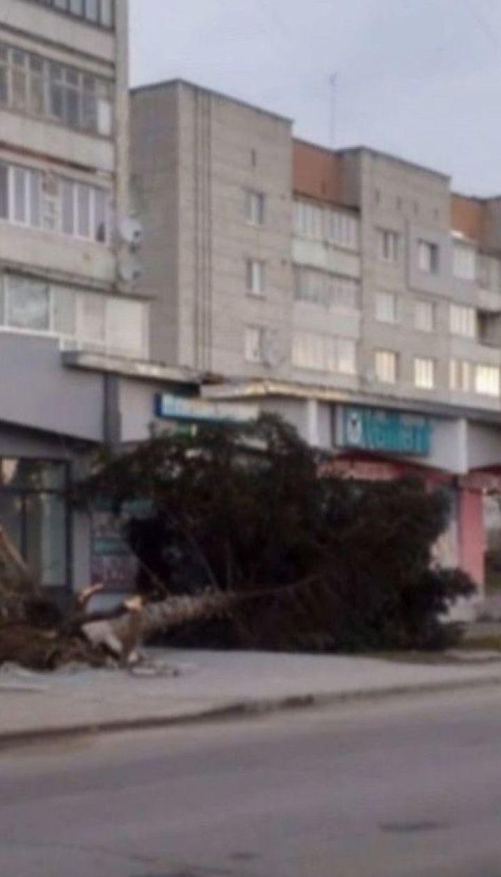 Сильний вітер у Львівській області повалив бігборди, викорчував дерева та позривав дахи