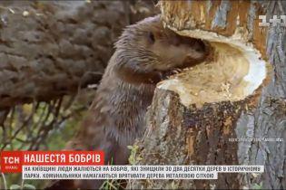 Бобры уничтожили два десятка деревьев в историческом парке в Киевской области