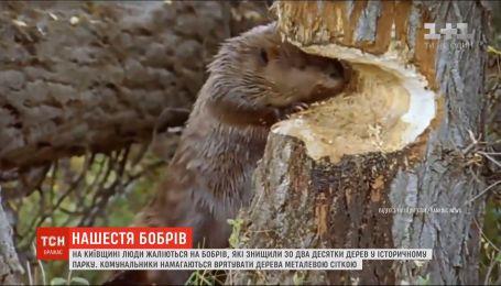 Бобры уничтожили два десятка деревьев в историческом парке в Киевской обалсти