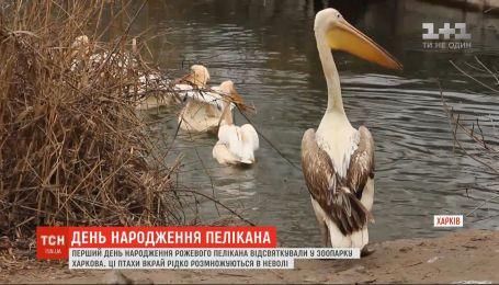 В харьковском зоопарке отметили день рождение уникального розового пеликана