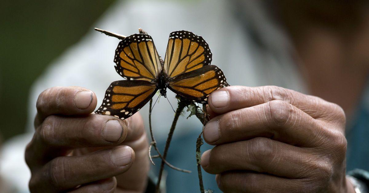 В мире массово вымирают насекомые. Какие катастрофические последствия угрожают человечеству: инфографика