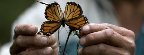 У світі масово вимирають комахи. Які катастрофічні наслідки загрожують людству: інфографіка