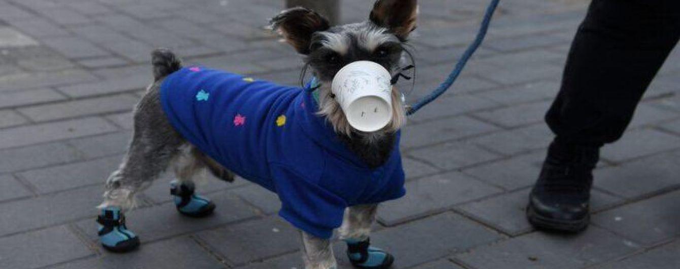 У Гонконгу помер перший собака, який підхопив коронавірусну інфекцію