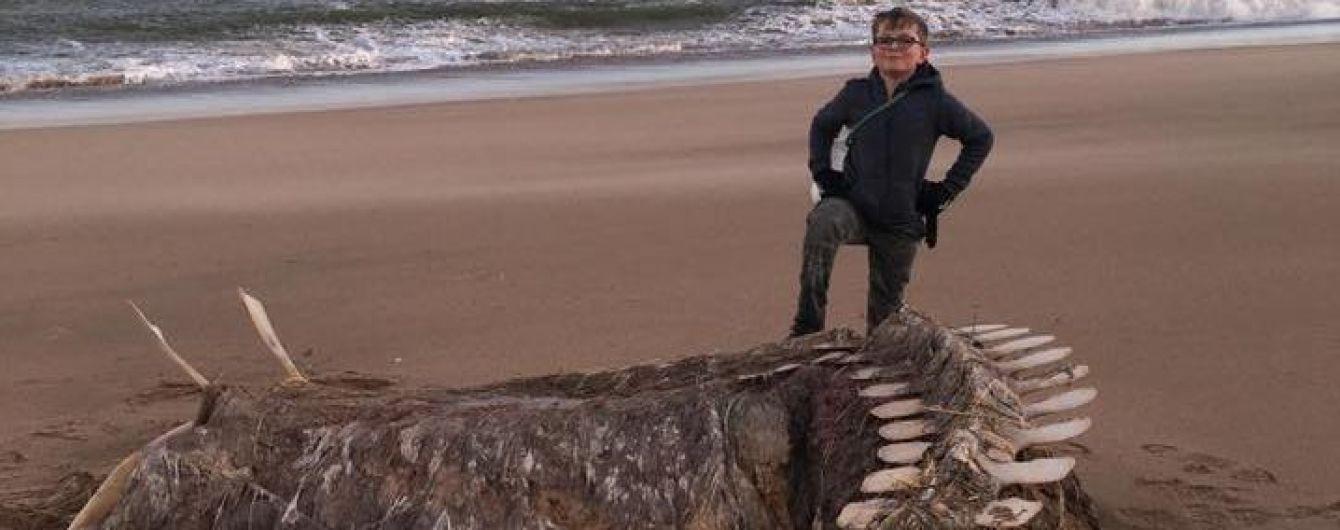 Схожий на лохнеське чудовисько: на пляжі Шотландії знайшли гігантський скелет невідомої істоти