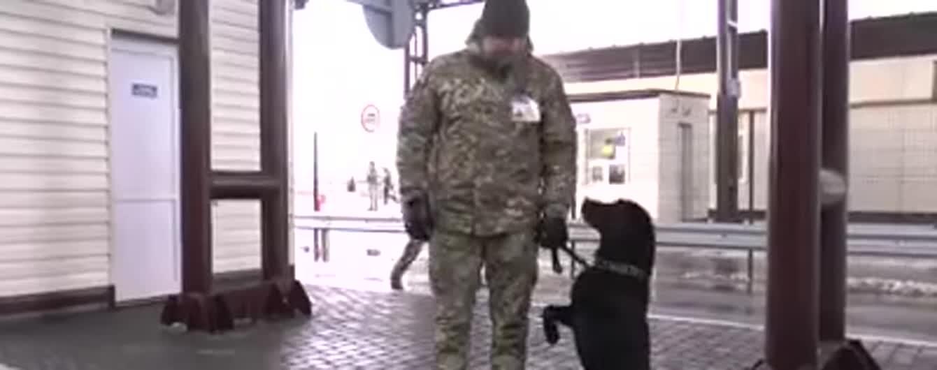 """Украинские пограничники научили служебного пса-патриота отвечать на лозунг """"Слава Украине"""""""