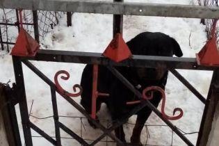 В Харьковской области ротвейлер до смерти загрыз 4-летнего ребенка