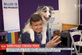 Разнообразие лап, ушей и хвостов: в Пенсильвании состоялось 144-е ежегодное шоу собак