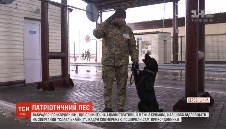 """Патриотический пес: собака-пограничник научился отвечать на обращение """"Слава Украине"""""""