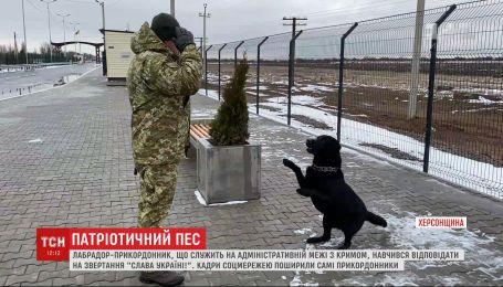 """Лабрадор-пограничник научился отвечать на """"Слава Украине"""""""