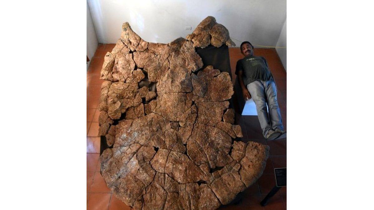 Гігантська черепаха_2