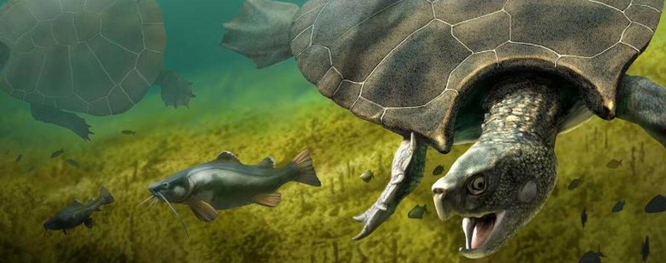 Учені знайшли рештки найбільшої в історії черепахи: вона була рогата і розміром з автівку