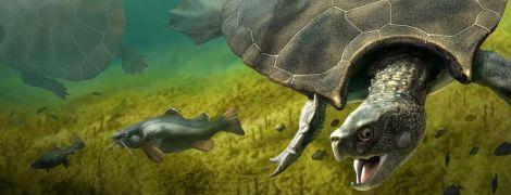 Ученые нашли останки самой большой в истории черепахи: она была рогатая и размером с машину