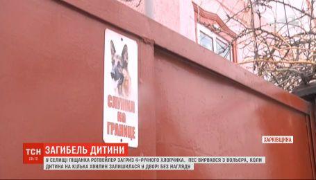 В Харьковской области ротвейлер загрыз 4-летнего мальчика: подробности трагедии