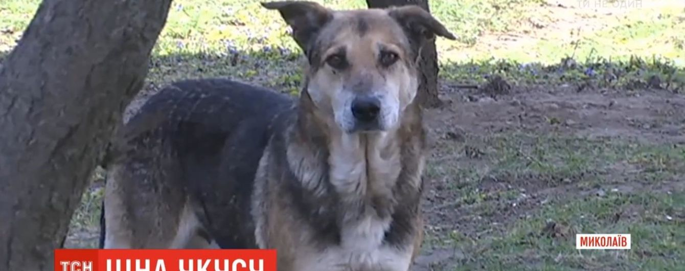 Суд Миколаєва зобов'язав міськраду виплати компенсацію жінці, яку покусав безпритульний пес