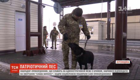 """Прикордонники показали, як собака реагує на лозунг """"Слава Україні"""""""