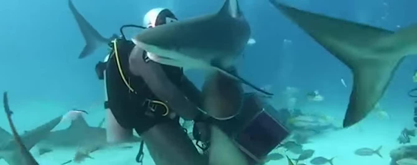В Карибском море дайверы накормили 50 голодных акул и сняли это на видео