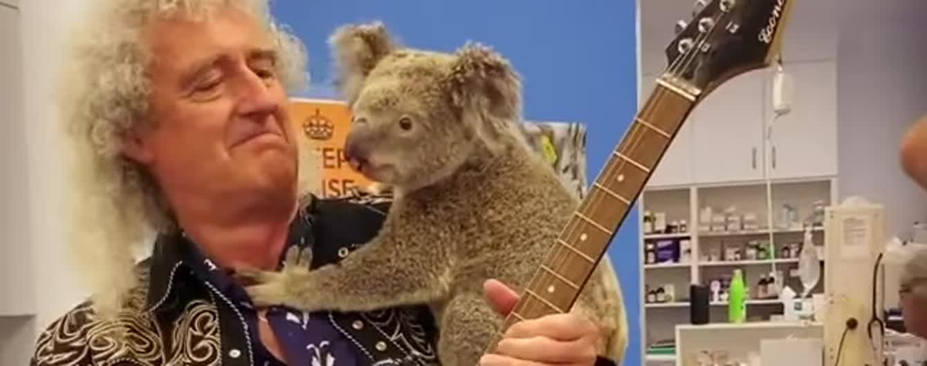Гітарист Queen зіграв сольний концерт для врятованої з пожежі коали