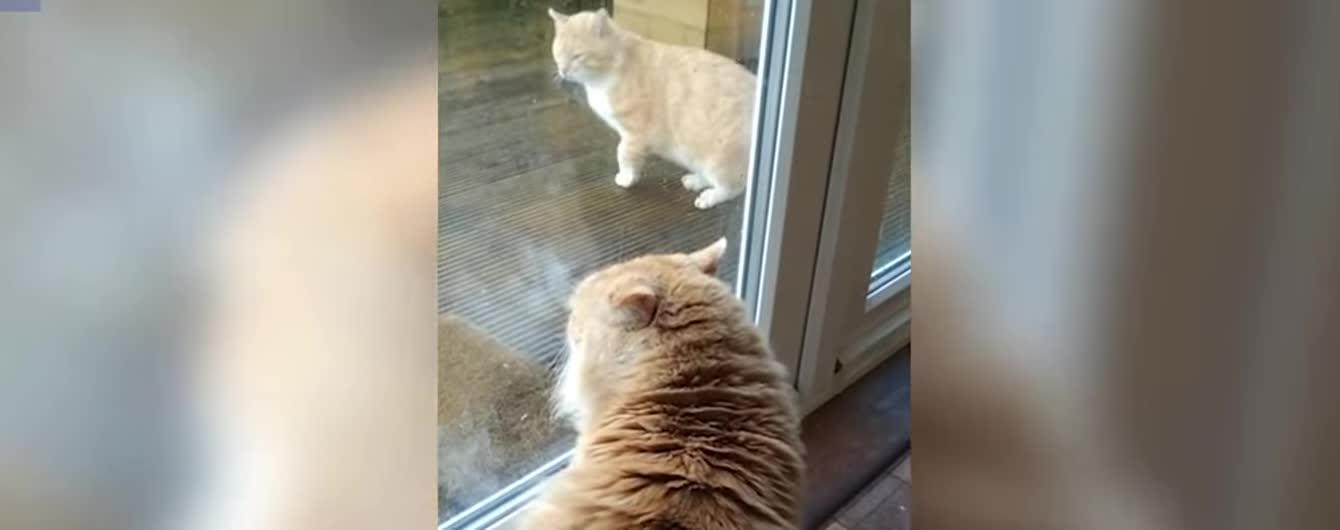 В Ірландії домашній кіт дивними звуками прогнав безпритульного чотирилапого
