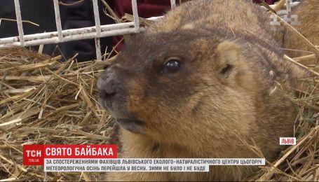 Із осені у весну: бабаки у Львові зробили кліматичний прогноз
