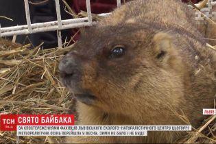 С осени в весну: сурки во Львове сделали климатический прогноз