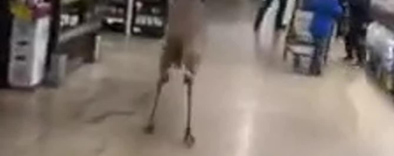 Неожиданный посетитель: в США в супермаркет забежал олень