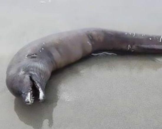 З довгим тілом і гострими зубами: у Мексиці знайшли дивну істоту на узбережжі
