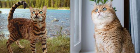 Пушистик-путешественник и кошка, которая победила рак. 7 самых популярных котов в Instagram