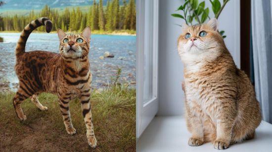 Пухнастик-мандрівник і кішка, що перемогла рак. 7 найпопулярніших котів у Instagram