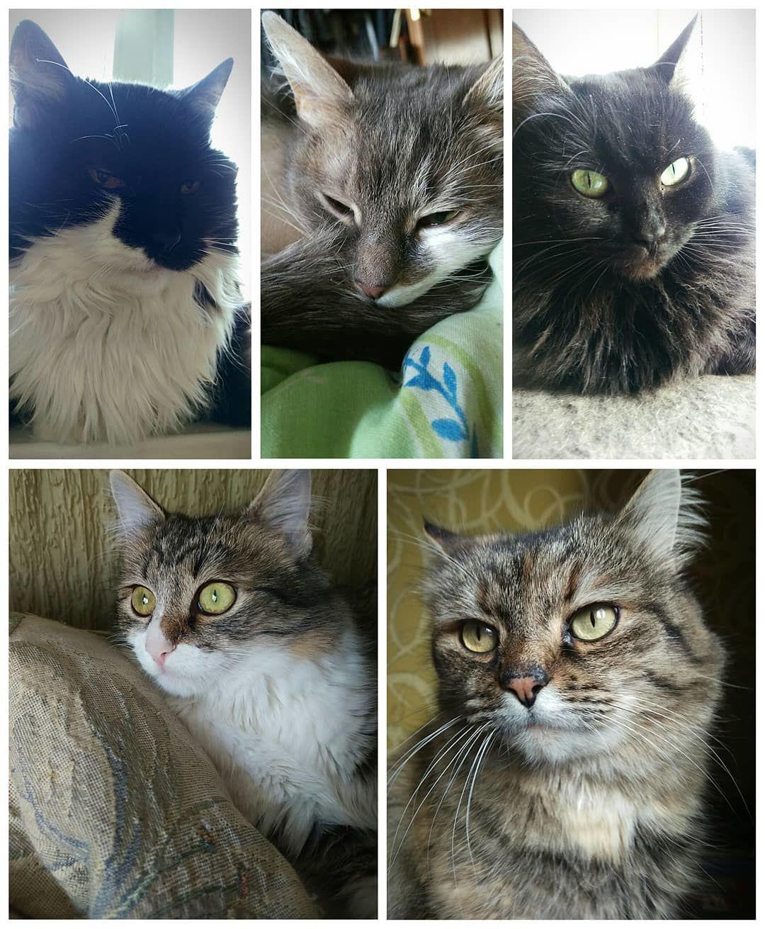 Зіркові коти_2