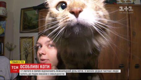 Международный день кота: украинцы все чаще берут в семьи усачей с инвалидностью