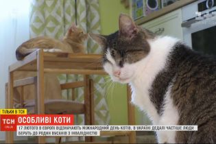 Невозможно не любить: украинцы все чаще забирают в свои семьи котиков с изъянами