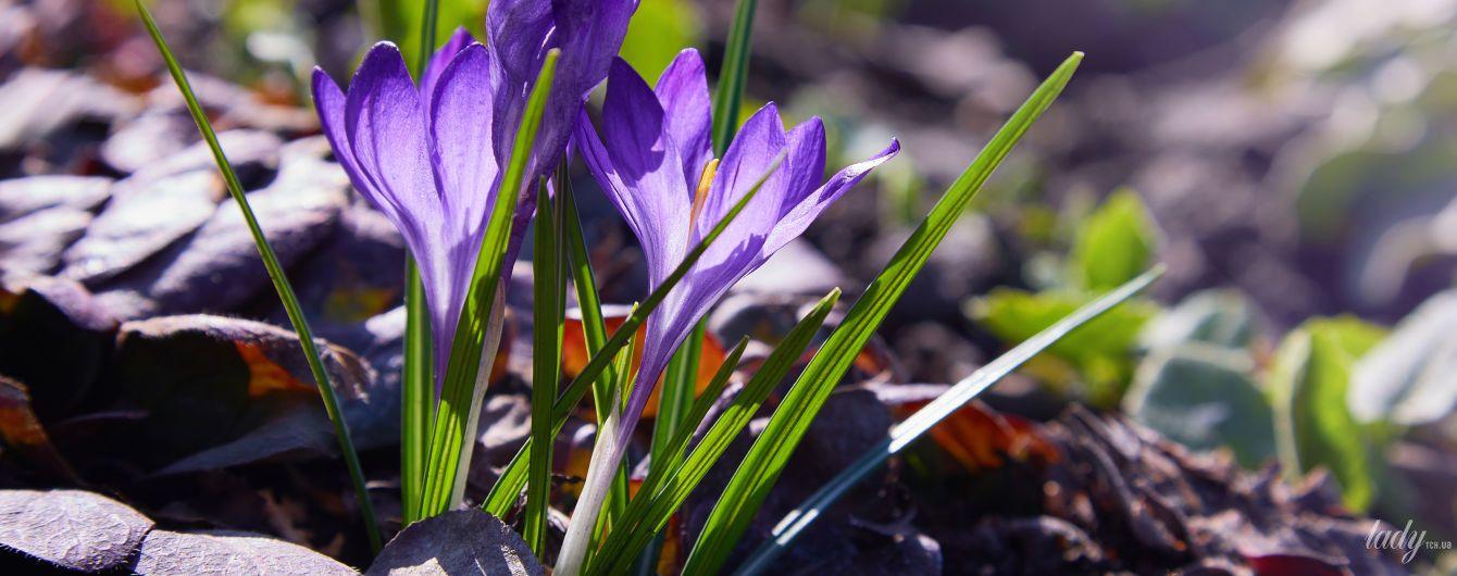 День доброй энергетики и финансовой прибыли: гороскоп на 21 февраля