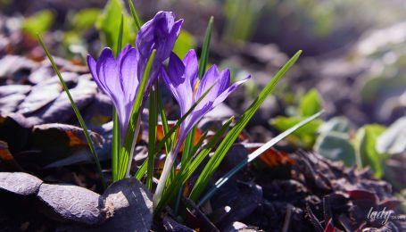 День доброї енергетики та фінансового прибутку: гороскоп на 21 лютого