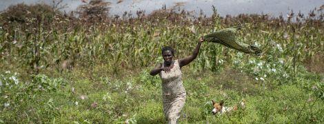 Нашествие саранчи достигло Южного Судана, население которого страдает от голода