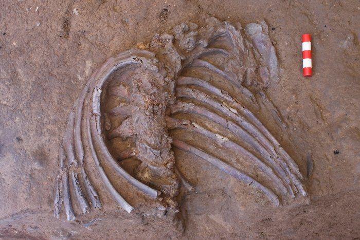 Кістки неандертальця_2