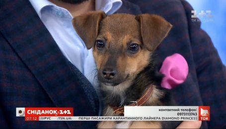 Добрый трехмесячный щенок ищет дом