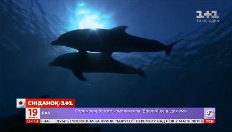 Турботливі та товариські: які цікаві факти варто знати про дельфінів