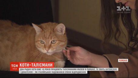 Руді талісмани: два котики 10 років живуть у румунському Національному музеї